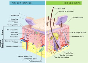 How Does the Sun Damage Skin? | Southeast Radiation