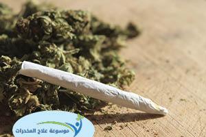 مخدر الماريجوانا اخطر مخدر