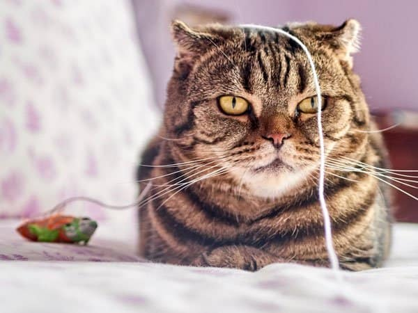 Cat sitting on bed with toy