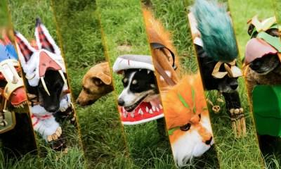Hearthstone | Cãezinhos fazem cosplay em parceria com ONG de adoção