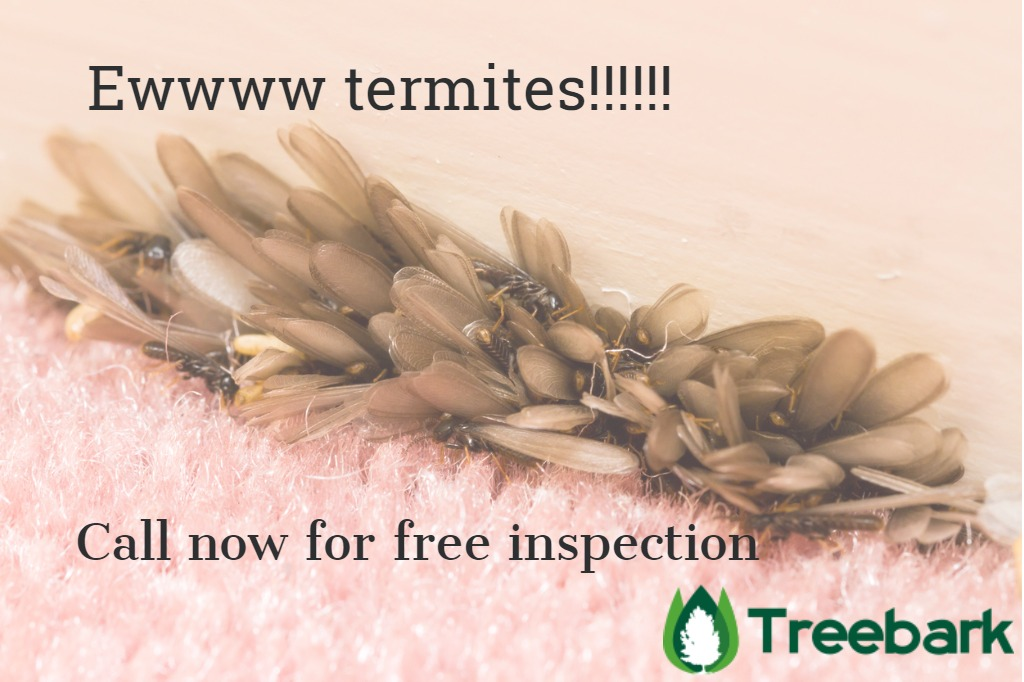 flying-termites-swarm-inside-a-home-at-a