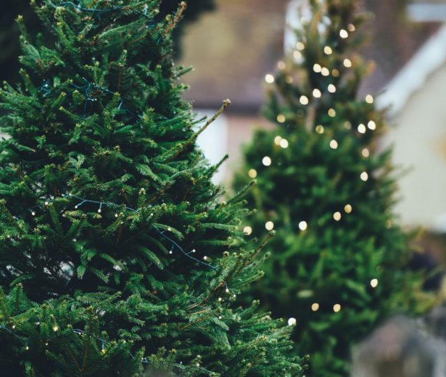Why Buying A Fake Christmas Tree Just Doesnt Cut It