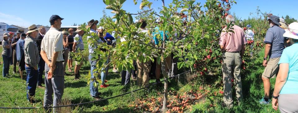Peckhams cider orchard