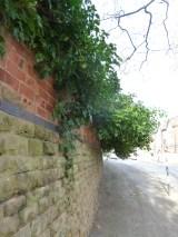 Brendan Tree Feller - Ivy Clearance Job - the Park, Nottingham - Photo 03 - before