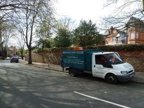 Brendan Tree Feller - Ivy Clearance Job - the Park, Nottingham - Photo 10 - after