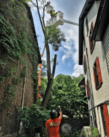 Technical tree removal between houses