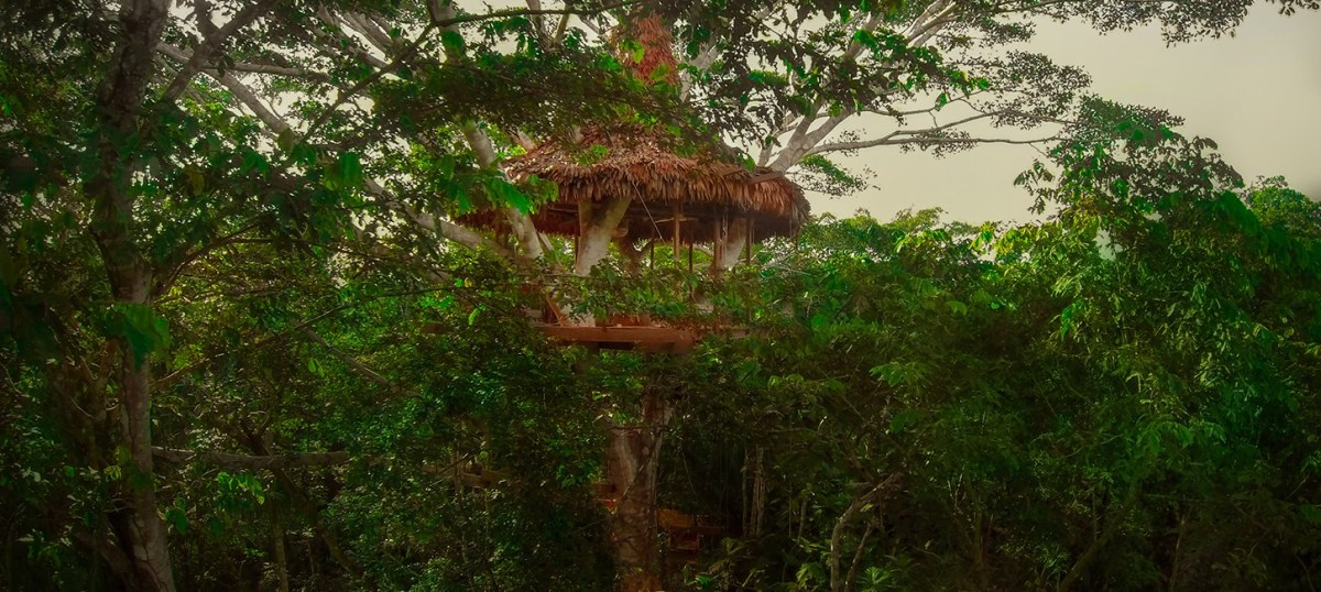 treehouse eight