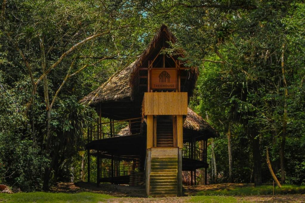 Treehouse entrance