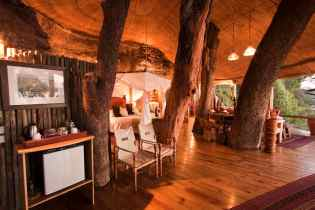 Luxury treehotel in africa