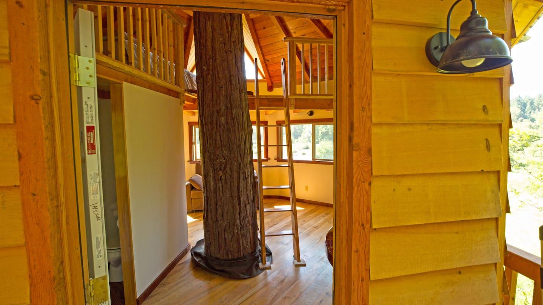 Unique Tree House Rental in Oregon