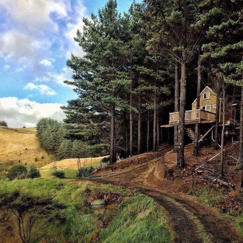 New Zealand Tree House Rental Airbnb
