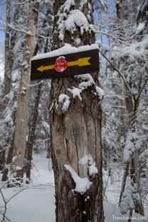Trail Arrow