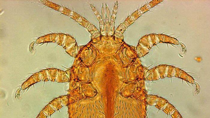 native australian bees