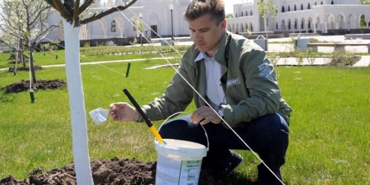 Компания ТРИмаркет осуществила в Республике Татарстан акцию по обработке высаженных лиственных пород деревьев инновационным покрытием ARBO-FLEX