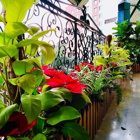 Balcony Garden plant