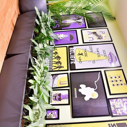 Indoor plants inida