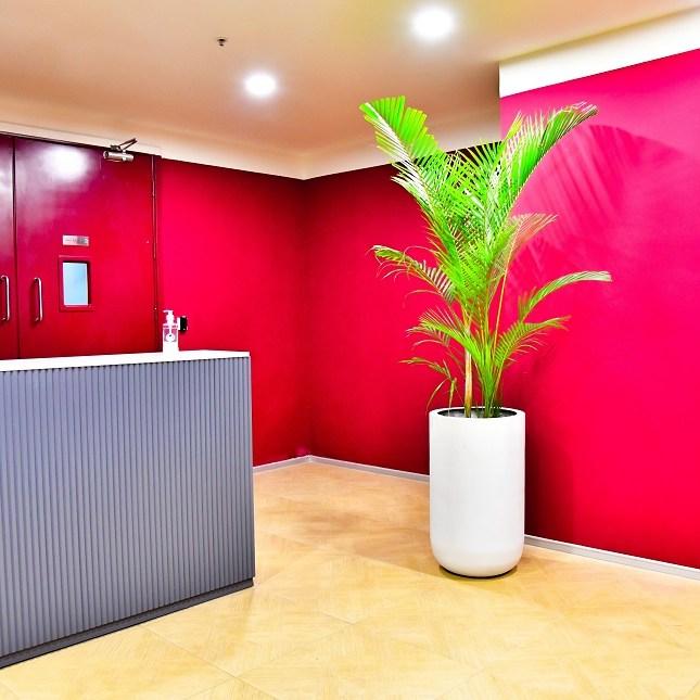 Office plants onlline
