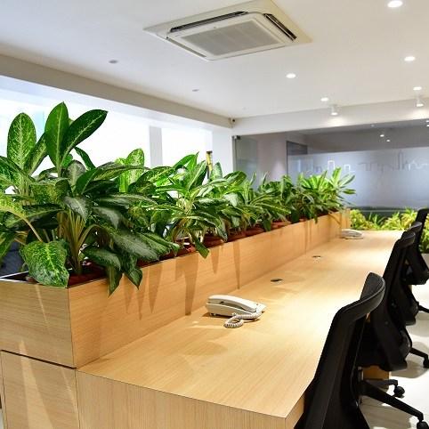 Plants at work bangalore