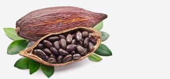 Le cacao, riche en zinc et en fer