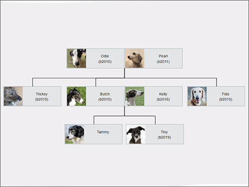 Pet pedigree chart