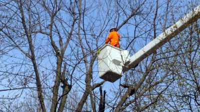 Narre Warren tree removal services