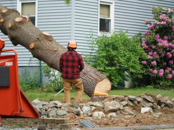 tree cutting service Norton ma