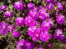 march-flowers-2.jpg