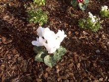 march-flowers-5.jpg