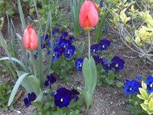 march-flowers-6.jpg