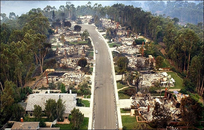Image result for ca fire trees not burned