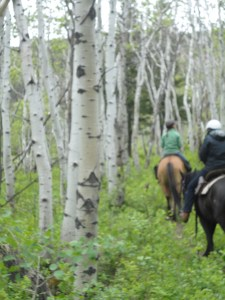 Horseriding through the aspens