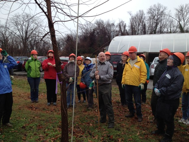 Barry Stahl, who is responsible for growing American elms for the National Park Service, here instructs TreeStewards and other citizen volunteers on the best way to prune trees to insure good structure and health. These American elms have been grown from seed at a nursery along the Potomac River and are part of an effort to boost on the National Mall the number of native elms, whose numbers were decimated after Dutch Elm disease spread rapidly across the country in the mid-20th century.