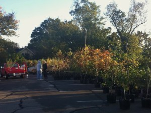 Eager recipients came at sunrise to adopt their tree and plant it by noon!