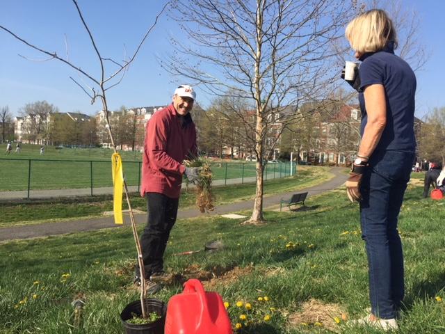 Volunteer Robert Ray knocks soil from turf roots at a planting site in Ben Brenman Park. Photo by Tree Steward Jane Seward.
