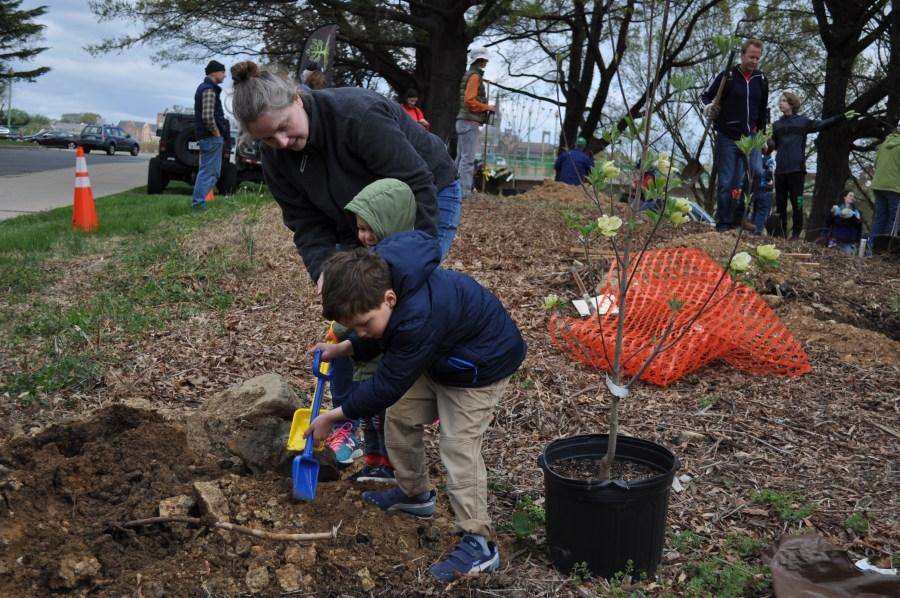 Twenty of the 32 trees planted were flowering Dogwood. Photo by Tree Steward Bill Anhut.