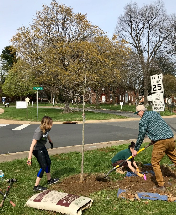 Tree Stewards Emily Graffum, left, and Vicky Tsaparas, right, help Village Protection and Improvement Society leader Keith Thurston plant a tree across the street from one of Falls Church's historic churches.
