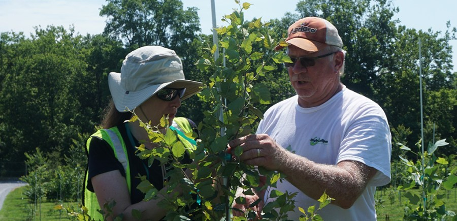 Todd Woodfield, right, demonstrates how to tie a tree's leader to a stake.