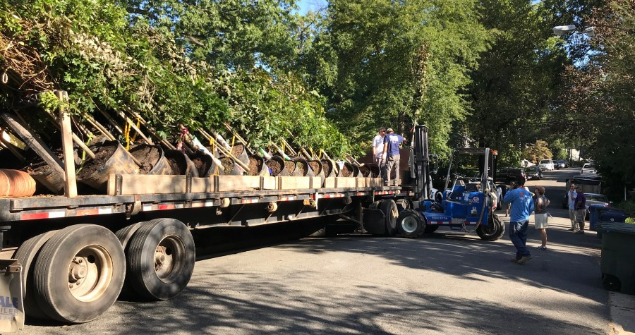139 trees on a flatbed trailer being unloaded by forklift for planting in North Ridge-Beverly Hills, Alexandria.