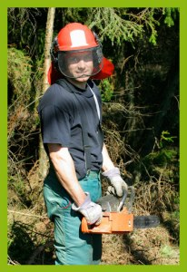 tree care expert cutting a tree