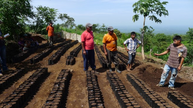 Guatemalan tree nursery