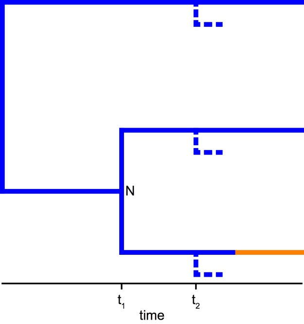 Figure 3. Extinction probabilities are independent of the tree and diversification-rate shifts on observed lineages. Let's try to imagine the birth-death process that produced this observed tree. At time t1 we observe a speciation event resulting in node N. The speciation event produces a left and right daughter lineage. To compute the probability of observing this speciation event, we need to compute the probability of a speciation event at time t1 and the probability that both daughter lineages survive. Clearly, the survival probabilities (i.e., 1 – extinction probability) of both daughter lineages must be equivalent because both daughter lineages start in the blue rate category. At time t1 we do not know the fate of the daughter lineages (e.g., if diversification-rate shifts will occur on either lineage); thus, if we were to simulate a process for both daughter lineages, they would both have the same probability of ultimate extinction.
