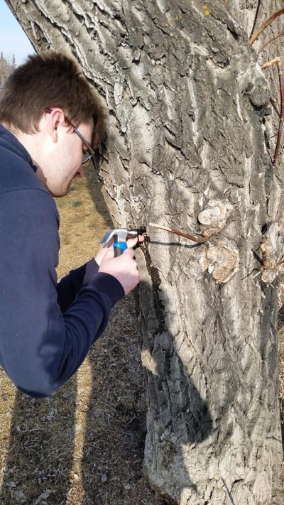 Scott tapping the first maple tree on our journey
