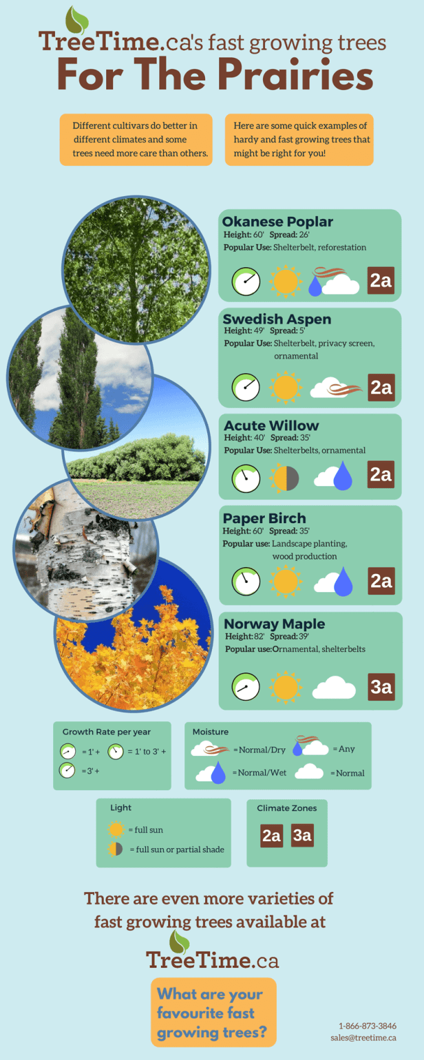 Fast Growing Trees For The Prairies