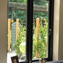 Härlig grönska i trädgård med utsikt från vardagsrum
