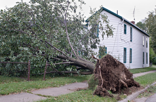 Tree fallen onto house