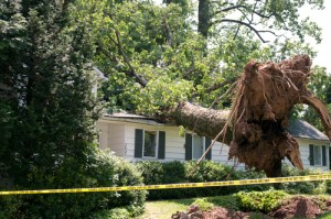 Tree that has fallen onto roof of a house