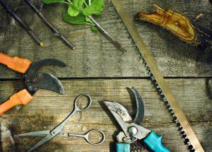 Set of summer tree pruning tools