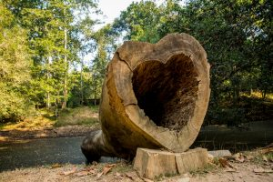 Heart cross section in cut tree trunk