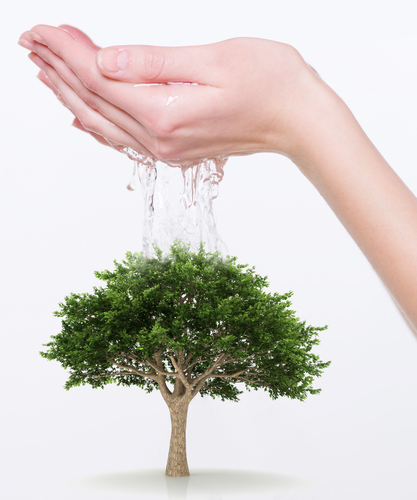 Human hands watering a new tree