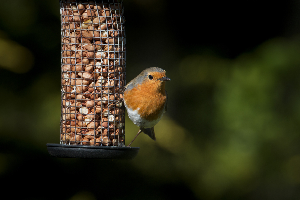 Feed the birds this winter